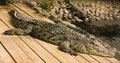 Free Crocodile Stock Images - 34153644