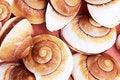 Free Seashells. Royalty Free Stock Photography - 34156947