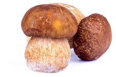 Free Porcini Mushrooms Royalty Free Stock Image - 34159826