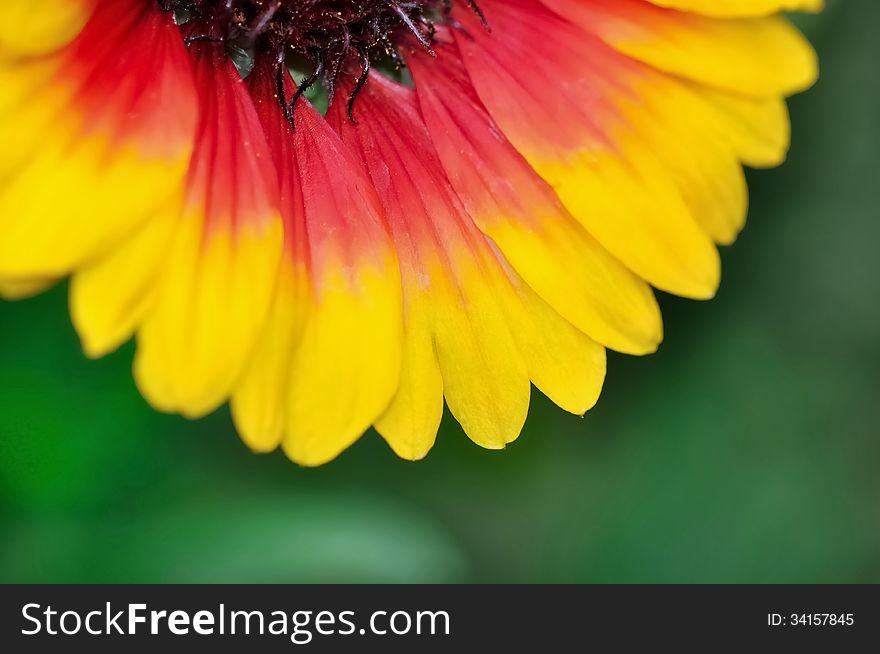 Brightly colored petals