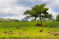 Free Group Of Wild Hog Deer Stock Images - 34165254
