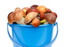 Mushrooms, Aspen Mushrooms, White, Boletus In The Bucket On A Wh Stock Images