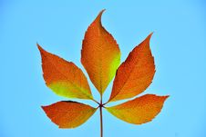 Free Five Brown Leafs In The Sun. Royalty Free Stock Images - 34162689