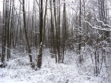 Free Winter Landscape In The Forest Stock Photos - 34164023