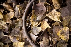 Free Fallen Leaves Royalty Free Stock Photo - 34166845