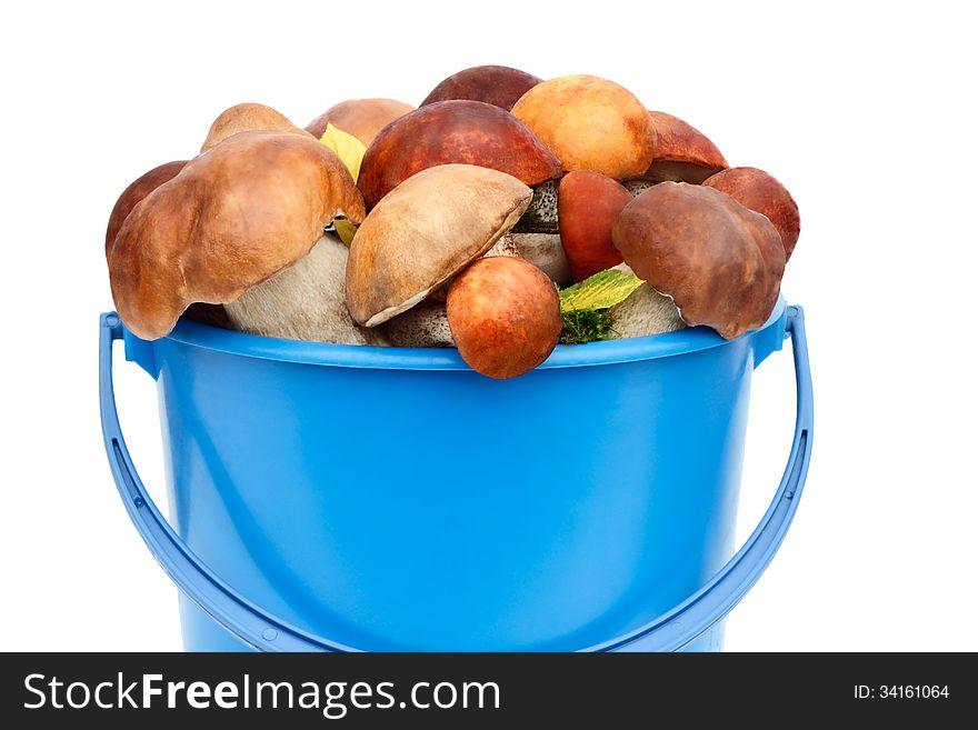 Mushrooms, aspen mushrooms, white, boletus in the bucket on a wh