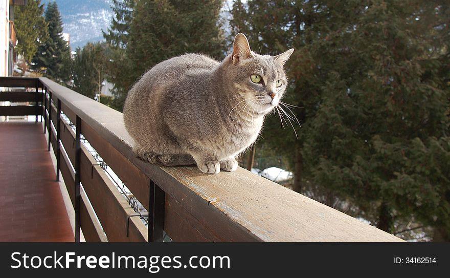 Cat on alert on the balcony