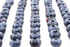 Free Fresh Blueberries Put In Lines Royalty Free Stock Photo - 34171625
