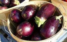 Free Eggplants Royalty Free Stock Photo - 34176165