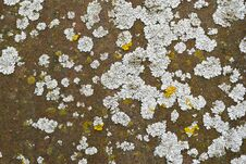 Free Lichen On A Rusted Metal Stock Photo - 34179080