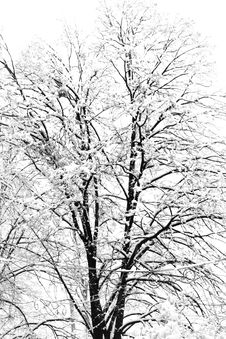 Free Winter Stock Images - 34179894
