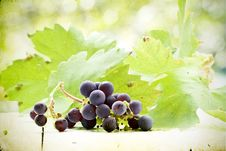 Free Vintage Photo Grapes On Colorful Autumn Background Stock Photos - 34183613