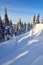 Free Sunny Winter Landscape Royalty Free Stock Photography - 34195037