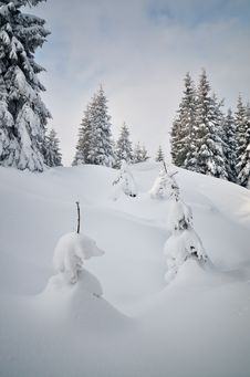 Free Winter In The Mountain Forest Royalty Free Stock Photo - 34194815