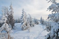 Free Winter Forest Royalty Free Stock Photography - 34195007