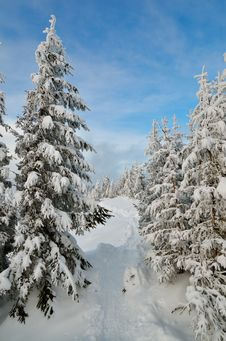 Free Winter Forest Royalty Free Stock Images - 34195009