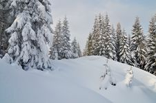Free Winter In The Mountain Forest Stock Photography - 34195032