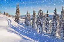 Free Coniferous Forest In Winter In Mountains Royalty Free Stock Images - 34195069