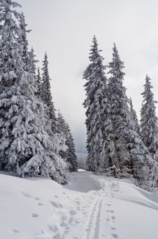 Free Ski Track In The Forest Royalty Free Stock Photo - 34195085