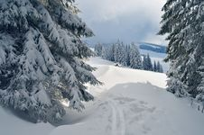 Free Ski Track In The Forest Royalty Free Stock Photography - 34195087
