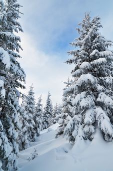 Free Winter Forest Stock Photos - 34195123