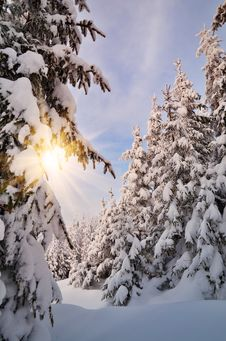 Winter Evening Stock Image