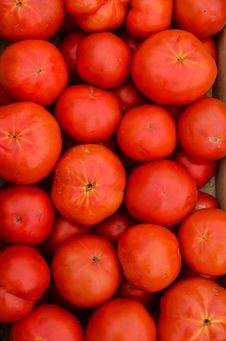Free Tomato Stock Image - 34195351