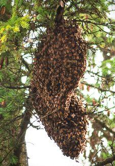Free Honey Bee Colony Stock Images - 34195424