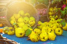 Free Quince Stock Images - 34195724