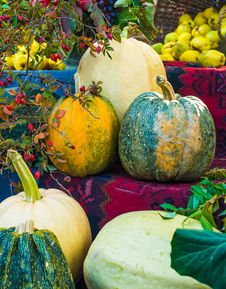 Free Pumpkins Royalty Free Stock Photography - 34195957