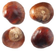 Free Chestnuts Set Stock Image - 34197501