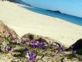 Free Chia Beach Stock Image - 3420591