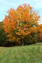 Free Autumn Foliage Stock Image - 3427341