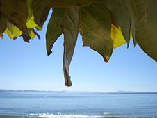 Free Beach And Leaves Stock Photography - 3420222