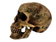 Free Human Skull Stock Photo - 3420580