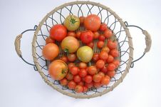 Fresh Tomatoes In Wire Basket Royalty Free Stock Photos