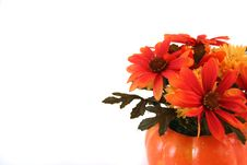 Free Isolated Halloween Flowers Stock Photo - 3422000