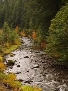 Free Aspens By The River Stock Image - 3422111