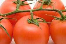 Free Vine Tomatoes Stock Image - 3422811