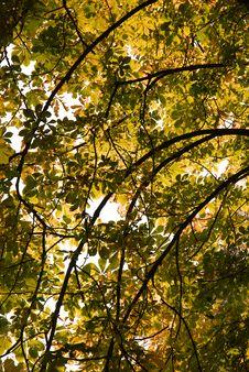 Free Autumn Fall Leaves Stock Photo - 3423260
