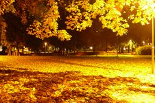 Free Autumn Night Royalty Free Stock Images - 3423279