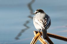 Free Bird Beside The River Royalty Free Stock Images - 3423769