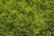 Free Green Lawn Pattern Royalty Free Stock Photos - 3426808