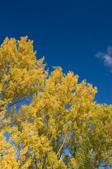 Fall Colors In Park Royalty Free Stock Image