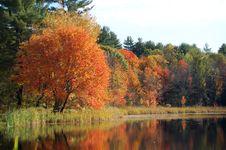 Free Autumn Foliage Reflected Stock Photo - 3427220