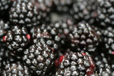 Free Fresh Juicy Blackberry Stock Photos - 3427283