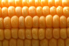 Free Fresh Grains Of Corn And Drops Stock Photos - 3427303