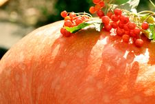 Free Red Berries On Pumpkin Royalty Free Stock Image - 3427306