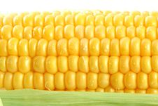 Free Fresh Mealie And Dewdrops Royalty Free Stock Images - 3427349