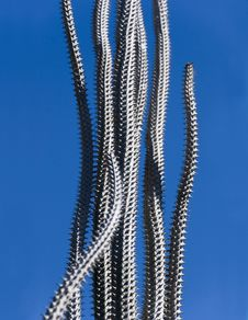 Free Tall Thin Spiky Cactus Stock Photography - 3427662